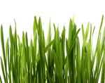 דשא סינטטי גולד